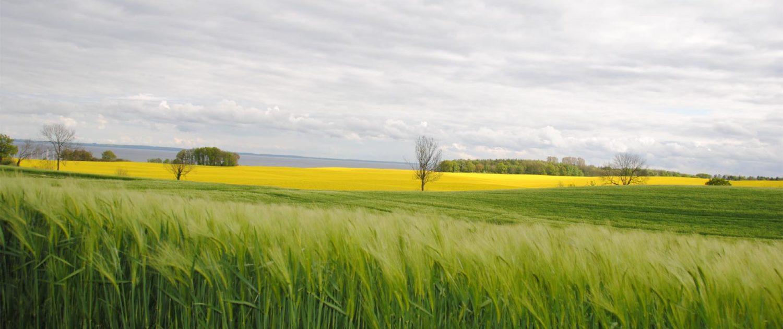 Getreide- und Rapsfelder